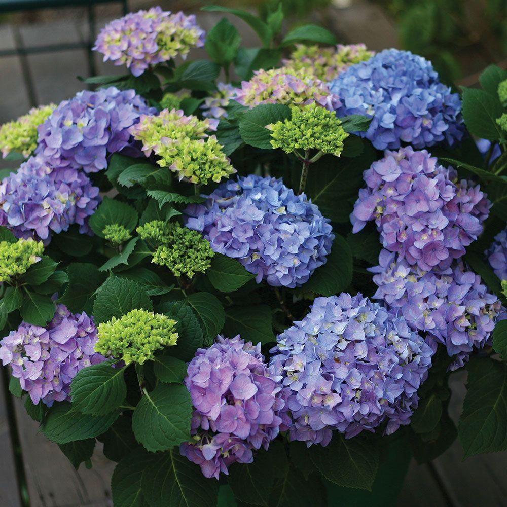 Blackriver Flowers S.A.S